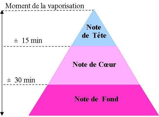 ob_dcb02a_image-pyramide-notes-de-parfum